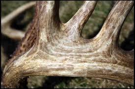 biggest buck ever killed