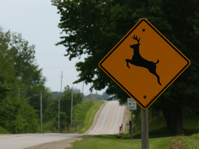 img-us-deer-collisions-inline
