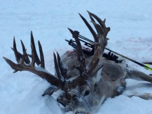Check out this incredible buck! Word on the street is that it gross-scores 273 inches nontypical.