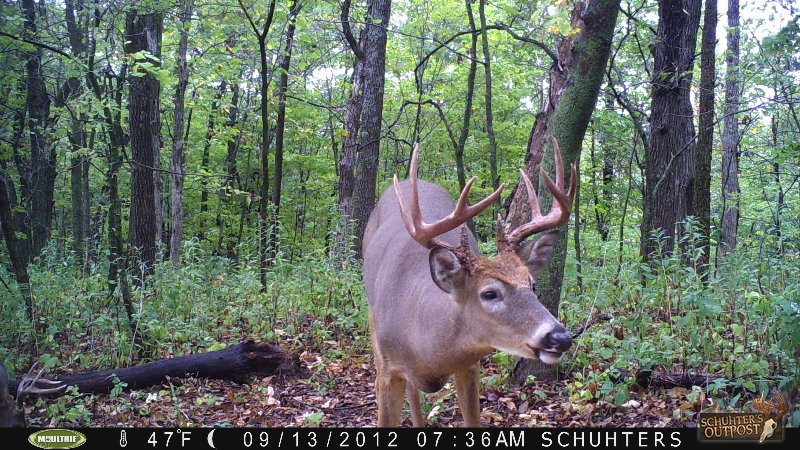 Deer pictures from Buffalo County
