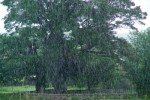 rain from freephoto
