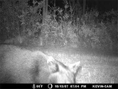 hunter_trailcam.jpg