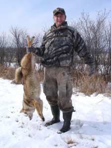 One less coyote that could impact deer populations!