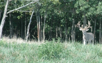 Mature bucks seldom enter open areas without first scanning the surrounding from a staging area.