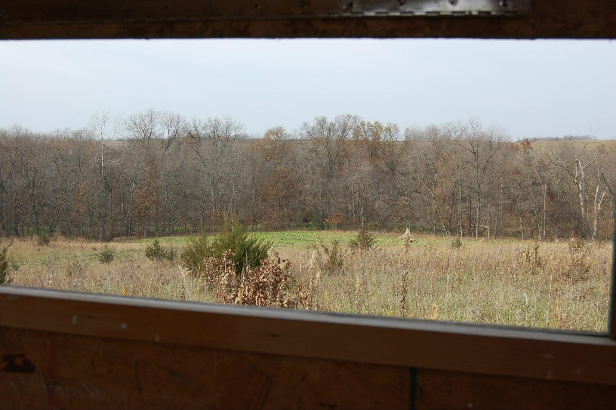 Overlooking the Tecomate food plot.