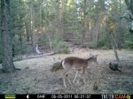 trail cam photos from the west