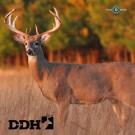 Arrowmat Target Deer