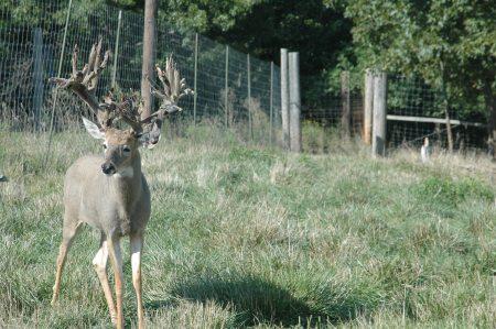 Deer Breeders File Lawsuit Say Captive Deer Aren T
